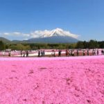 【2020年】富士山との絶景「富士芝桜まつり」開花時期や見頃は?